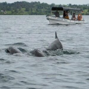 Panamatourdeals Tourcovers Dolphinsbay