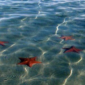 Panamatourdeals Tourcovers Starfishbeach