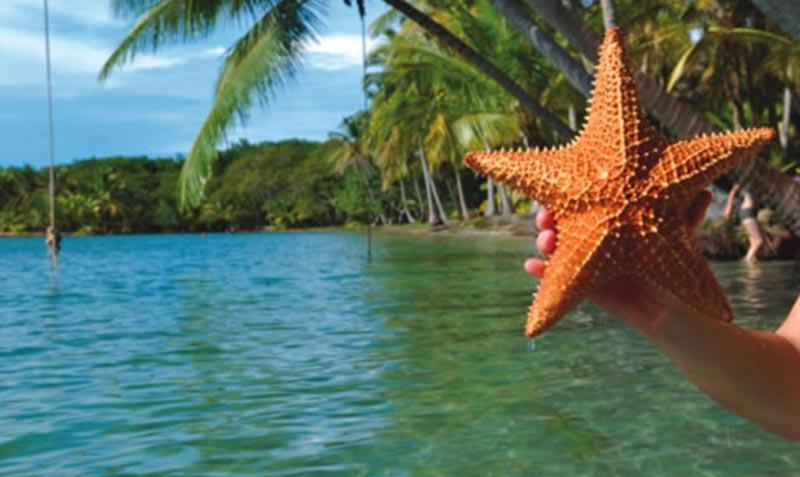 Panamatourdeals Tourcovers Starfishisland