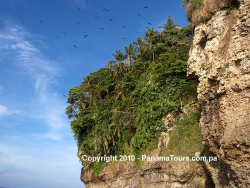 Bird Island Tour Bocas
