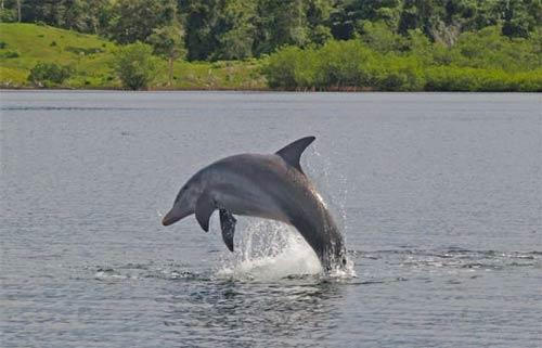 Bocas Del Toro Dolphin Bay2